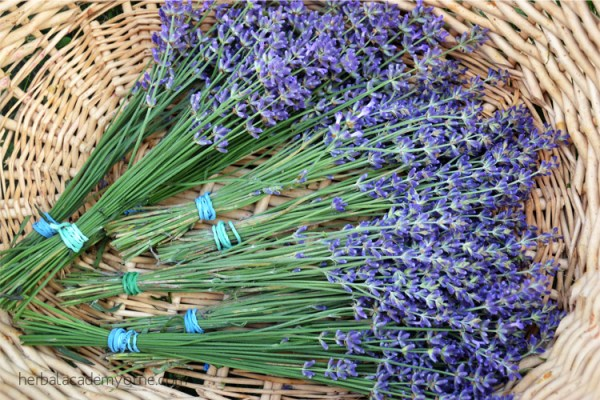 Lavender Honey Recipe - Remedies from the Medicinal Mint Family