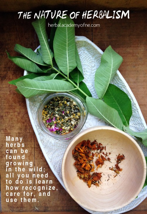 Many herbs can be found growing in the wild; all you need to do is learn how recognize, care for, and use them