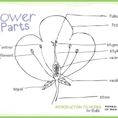Flower Parts Diagram Trailer Hitch Wiring Harness Of A For Kids