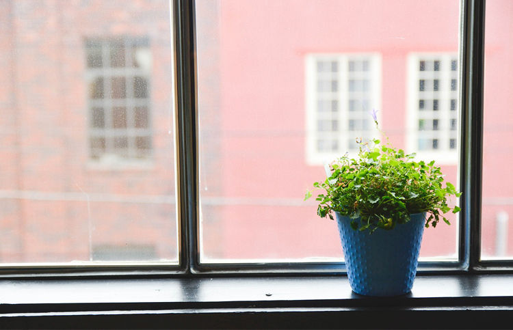 Herbs that Grow In Unlikely Locations - Indoor Gardens