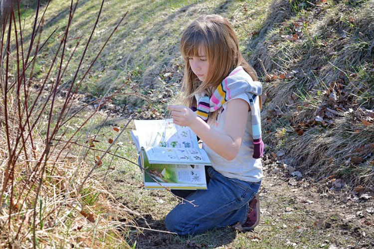 Create An Herbarium With Your Child