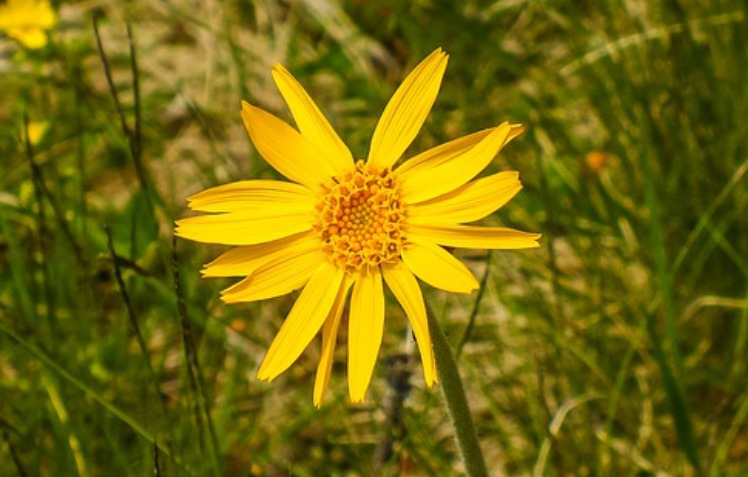 Mini Family First Aid Kit: Arnica