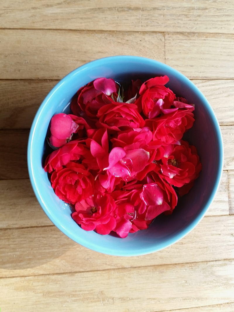How to Make and Use Rose Water - Herbal Academy blog