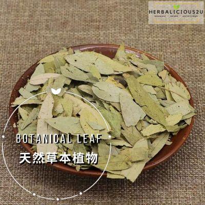 Botanical Leaf 天然草本植物