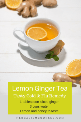 This lemon ginger tea recipe has many benefits for colds, flu, cough and sore throat. #colds #flu #cough #sorethroat #herbalism #herbalremedies #herbalismcourses