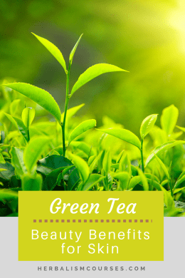 Green tea is a highly sought after antioxidant beauty ingredient for anti aging skin care. It can be used in a facial cleanser, facial mask or toner. #greentea #antioxidant #skincare #antiaging #herbalismcourses