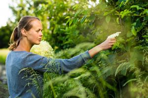 Online Herbalism Courses