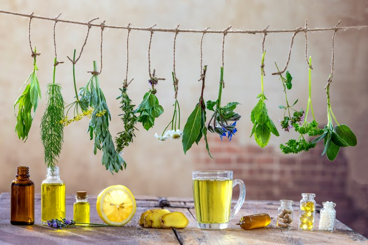 Choosing herbal tinctures versus tea can be challenging for those new to herbalism. With a bit of knowledge, the choice can be much more clear. #HerbalTinctures #HerbalTeas #HerbalMedicine #Herbalism #HerbalismCourses #OnlineHerbalCourse
