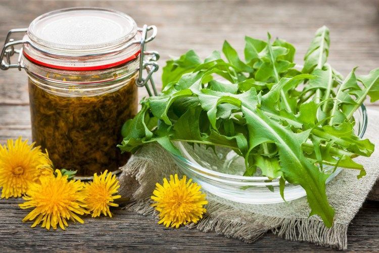 There are many benefits of bitter herbs. This are an important part of herbalism. #BitterHerbs #GoodDigestion #GutHealth #DIYBittersRecipes #Herbalism #HerbalMedicine #HerbalismCourses #OnlineHerbalCourse