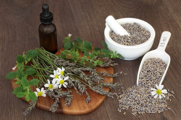 These natural remedies for stress and anxiety are made into a tincture recipe. #StressHerbs #AnxietyHerbs #StressRemedies #AnxietyRemedies #Herbalism #HerbalMedicine #HerbalismCourses #OnlineHerbalCourse