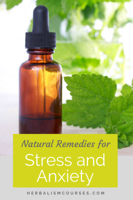Natural remedies for stress and anxiety help calm and relax the nervous system. Learn more about this important herbal medicine. #StressHerbs #AnxietyHerbs #StressRemedies #AnxietyRemedies #Herbalism #HerbalMedicine #HerbalismCourses #OnlineHerbalCourse
