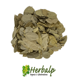 infusion-boldo-herbalp
