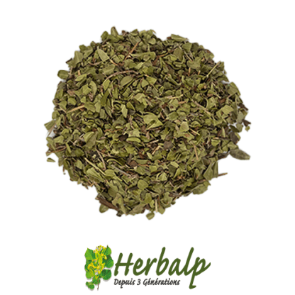infusion-busserole-herbalp