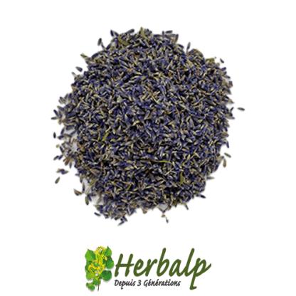 infusion-lavande-herbalp