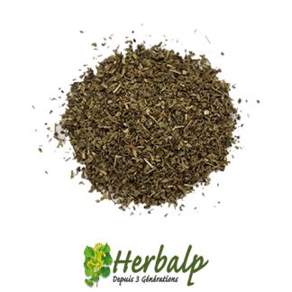 Basilic-herbalp