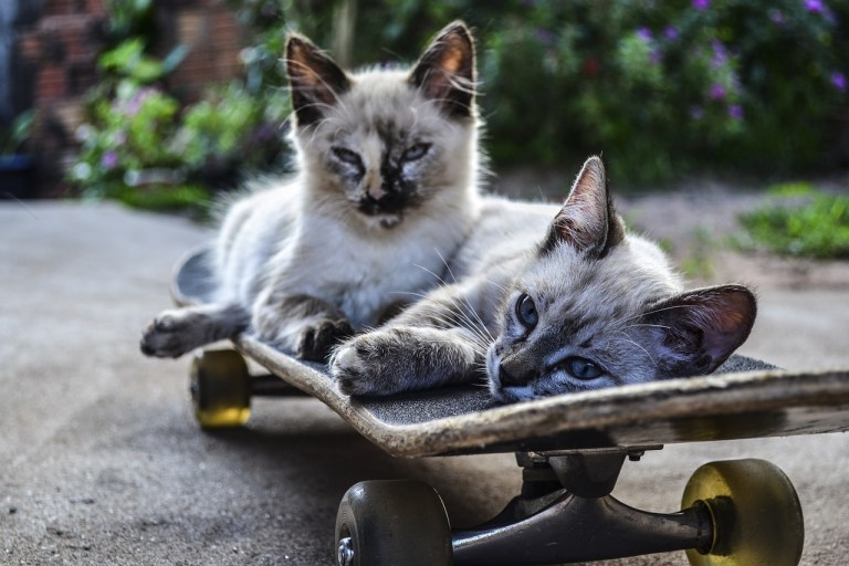 Two cats relaxing on a skateboard