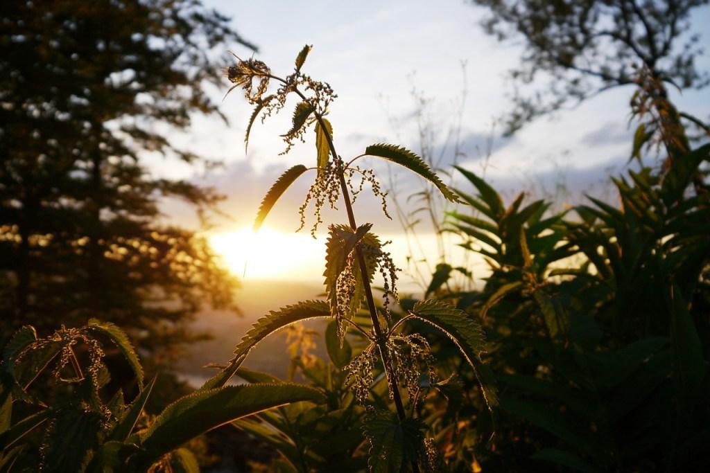 Weeds as Medicine