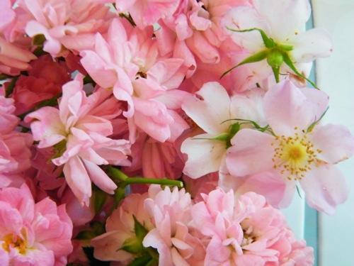 How To Make Rose Petal Lemonade Herban Lifestyle