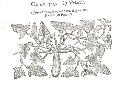 https://blogs.loc.gov/inside_adams/2010/11/a-sweet-potato-history/