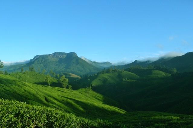Munnar, Kerala, India. Photo credit:Ginu C Plathottam.