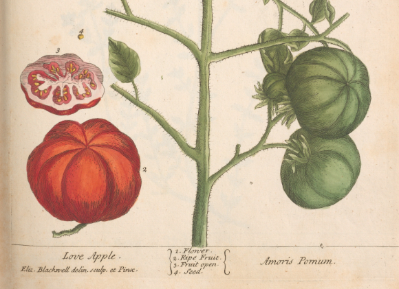 "Elizabeth Blackwell's ""Love Apples"""