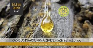 Kadidlo, dračia krv a živice - liečivá sila stromov - Žilina @ Radosť- pohybové a terapeutické centrum | Zilina | Slovakia