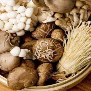 jenis jamur dan manfaatnya - herbatani.com