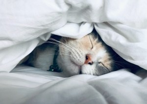 Adorable Cat Taking a Nap