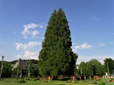 Eine Geschichte für die Lauschpöhle: Der Lebensbaum