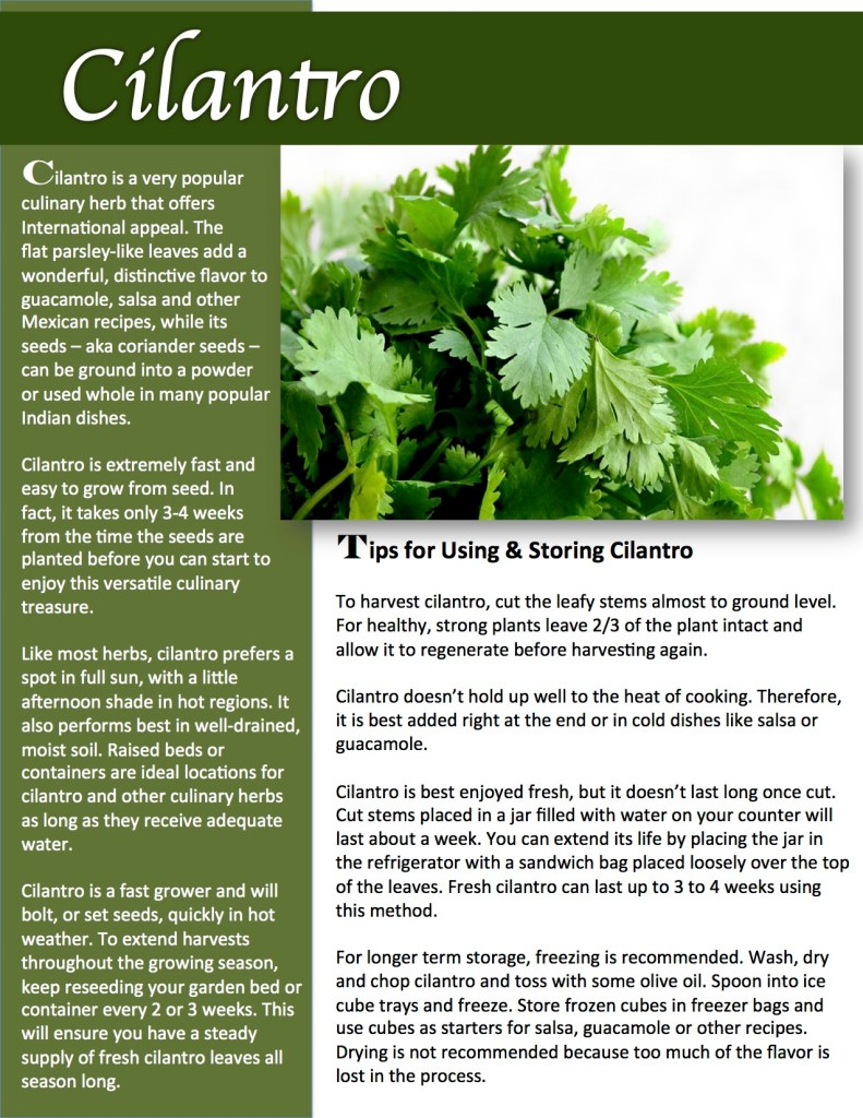Herb Gardening Tips: How to grow, use and preserve cilantro.