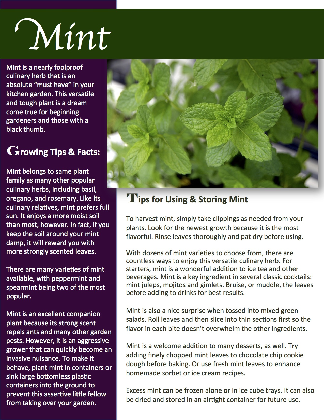 Do mint leaves repel ants