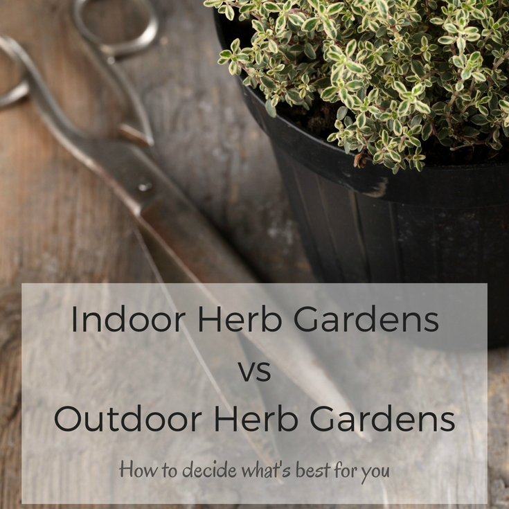 Indoor Herb Gardens vs Outdoor Herb Gardens: Which is Right for You?