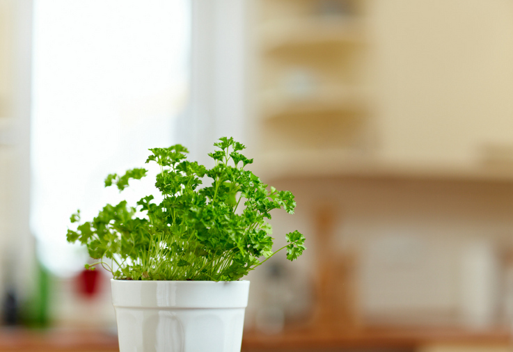 The top 3 herbs to grow indoors