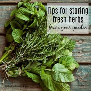 Tips for Storing Fresh Herbs from Your Garden