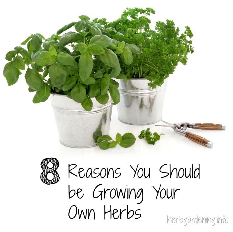 8 reasons you should be growing your own herbs #herbgardening #gardening