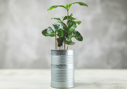 DIY Containers for Herb Gardens. Tin cans are another great option for those wanting to reduce waste, and will save you money without having to purchase plant pots.