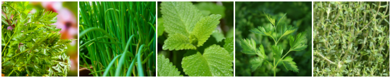 5 Herbs for Shady Spots: 1. Chervil 2. Chives 3. Lemon Balm 4. Parsley 5. Thyme
