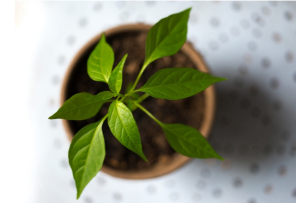 15 types of basil to grow in your garden.