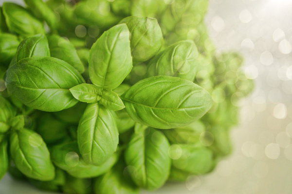 Basil is one of several fragrant herbs you can grow in your garden to help reduce stress levels.