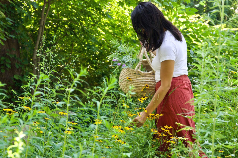 gathering herbs to make herbal preparations