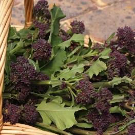 Purple_Sprouting_Broccoli