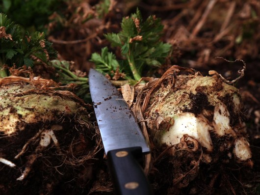 A large kitchen knife hacks off the muddy roots in the garden