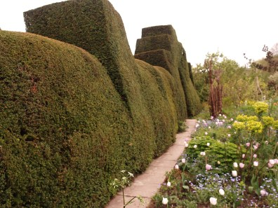 Magnificent buttressed hedges