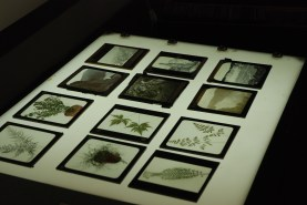 Some of the Museums's magic lantern slides