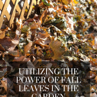 Utilizing the Power of Fall Leaves in the Garden