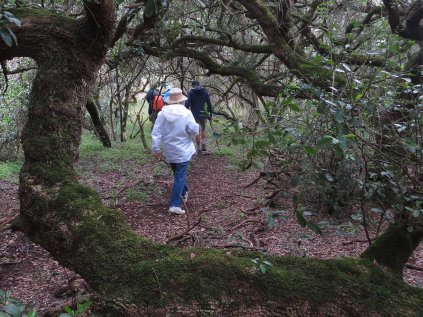 In a Milkwood forest