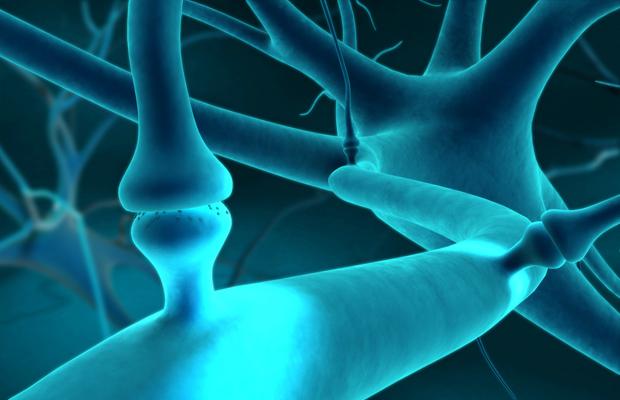 Endocannabinoïde-systeem
