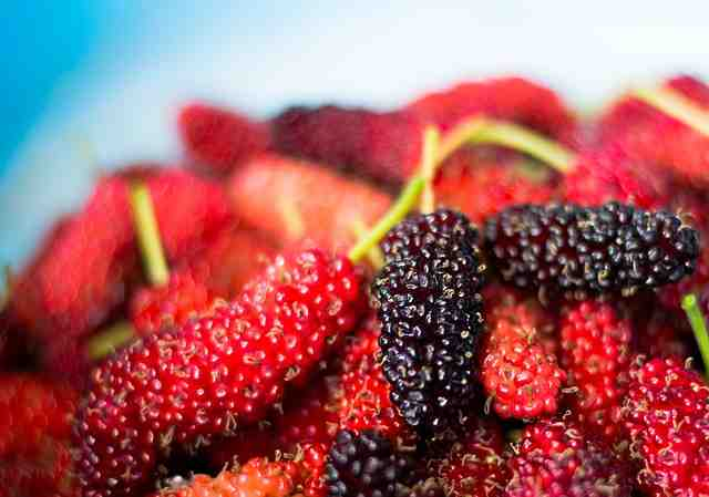 Mulberry benefits for health