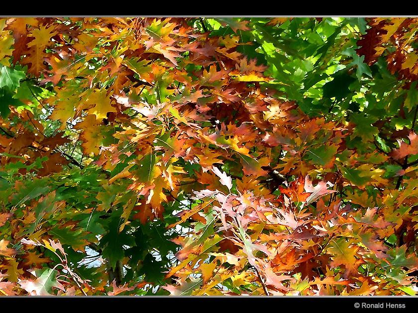 Herbst Herbstblätter
