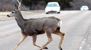 deer-on-highway
